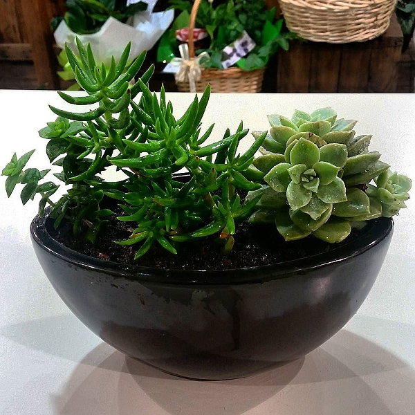 Succulent Planter from Hanging Basket Florist Rockingham