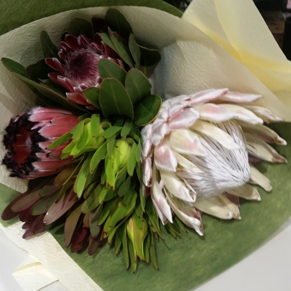 Wedding Flowers Rockingham Wa : Protea posy hanging basket florist rockingham