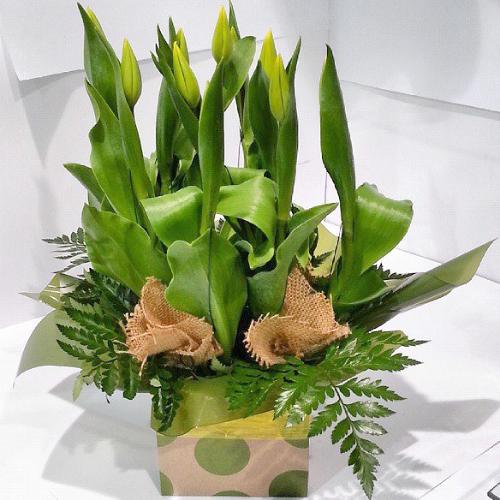 Wedding Flowers Rockingham Wa : Tulip box hanging basket florist rockingham