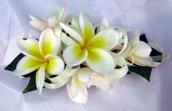 Wedding Flowers Rockingham Wa : Corsages rockingham